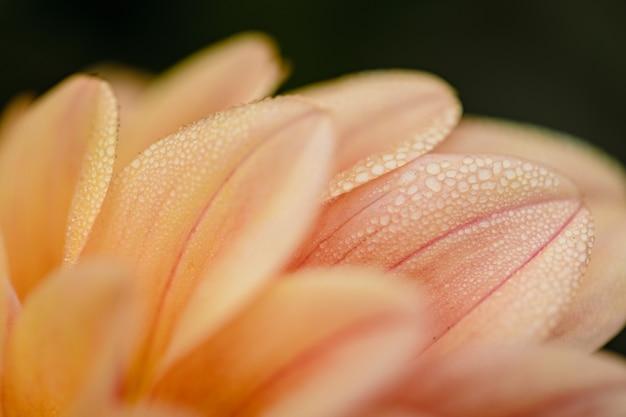 Flor rosa com gotas de água