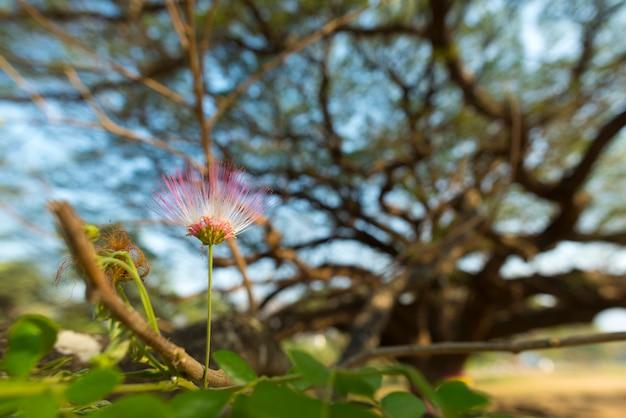 Flor rosa da grande árvore
