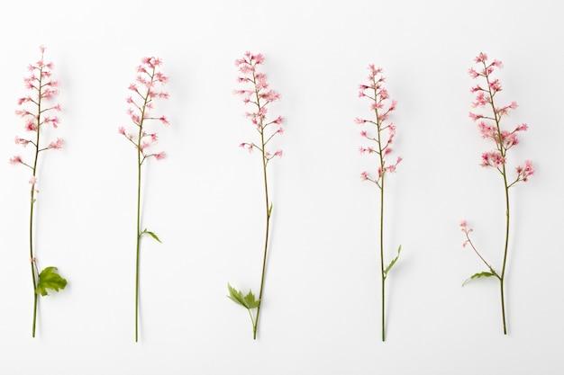 Flor rosa desabrochando heucherella em uma superfície de superfície branca