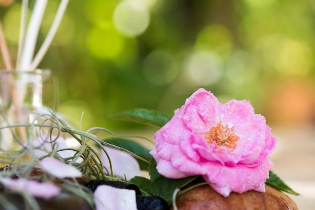 Flor rosa do damasco no fundo da natureza.