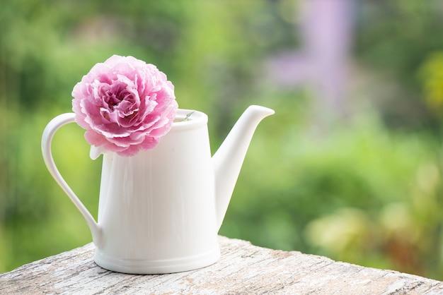 Flor rosa do damasco rosa em um bule de chá branco na superfície da natureza.