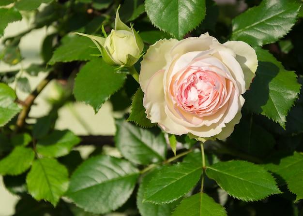 Flor rosa em folhas verdes