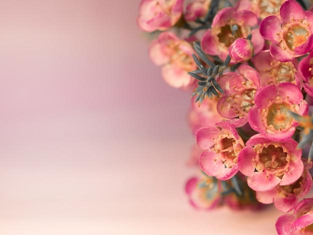 Flor rosa em fundo desfocado com bokeh bonito, destacando especialmente a beleza da flor