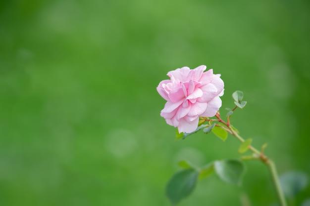 Flor rosa em vegetação desfocada