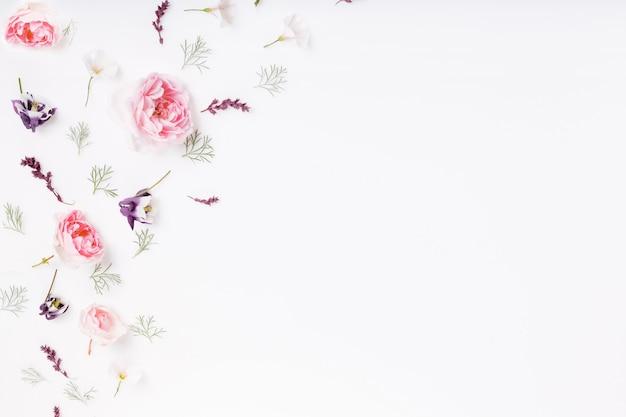 Flor rosa festiva composição rosa inglês no fundo branco. vista superior aérea, configuração plana. copie o espaço. aniversário, mãe, dia dos namorados, mulheres, conceito do dia do casamento.