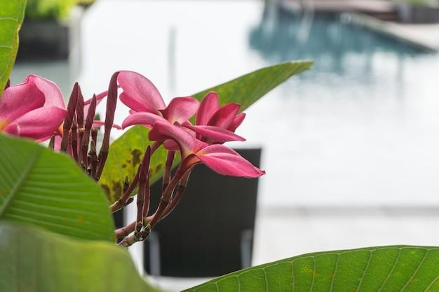 Flor rosa na piscina no prédio do condomínio