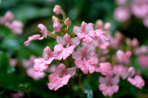 Flor rosa perto da queda de água