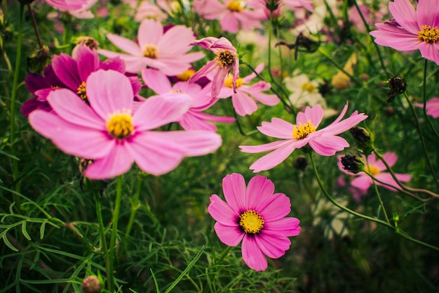 Flor rosa que floresce no campo que floresce no jardim