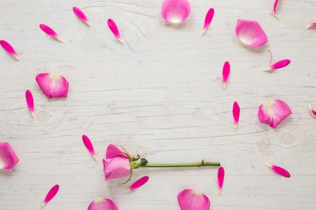 Flor rosa rosa com pétalas na mesa de luz