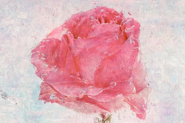Flor rosa rosa molhada