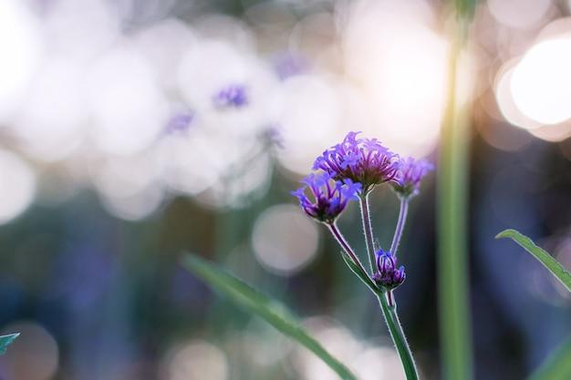 Flor roxa ao pôr do sol na floresta.