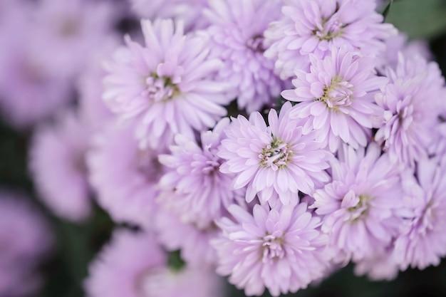 Flor roxa closeup no jardim texturizado fundo