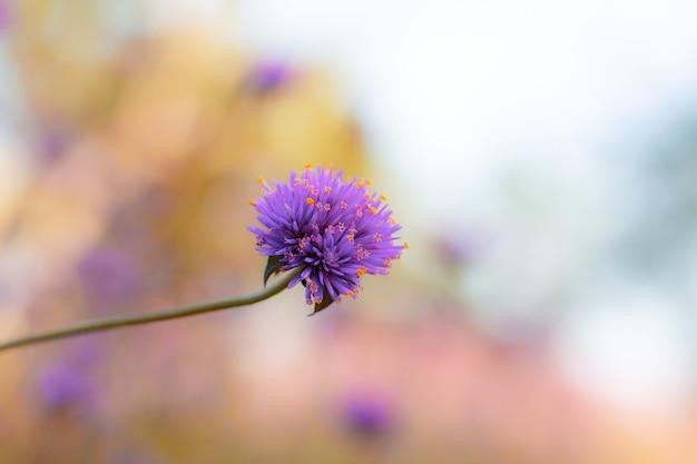 Flor roxa com fundo desfocado.