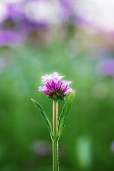 Flor roxa com fundo desfocado. Foto Premium
