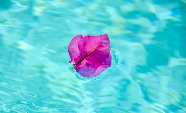 Flor roxa de buganvília na superfície da piscina.