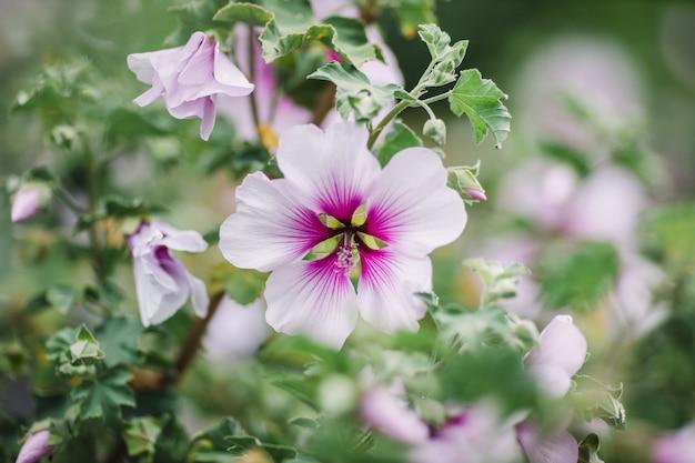 Flor roxa e branca em lente tilt shift