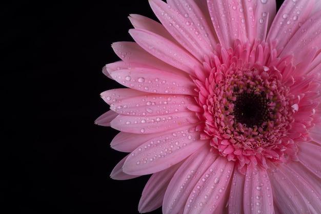 Flor roxa fresca no fundo preto