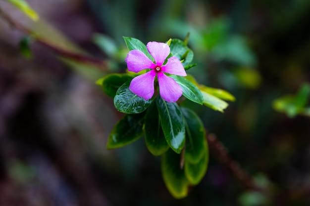 Flor roxa na selva