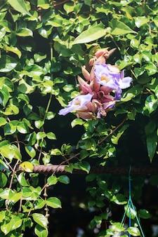 Flor roxa no parque no plantio com verde.