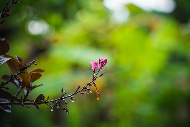 Flor roxa pequena no fundo do borrão, chave baixa e espaço para colocar o uso do texto