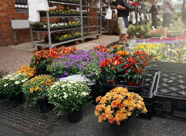 Flor rua mercado