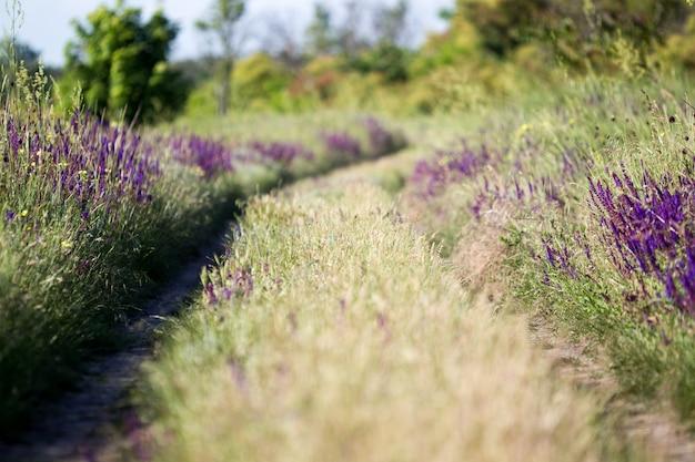 Flor selvagem de florescência - flor do prado. belo campo com desfoque de fundo