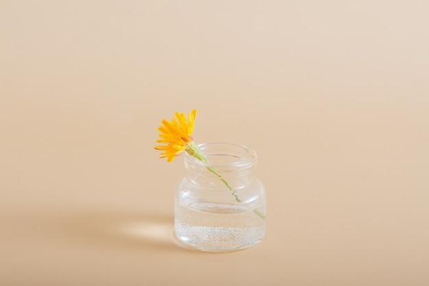 Flor silvestre amarela em miniatura em uma garrafa de vidro em um fundo sólido
