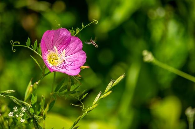Flor silvestre com abelha