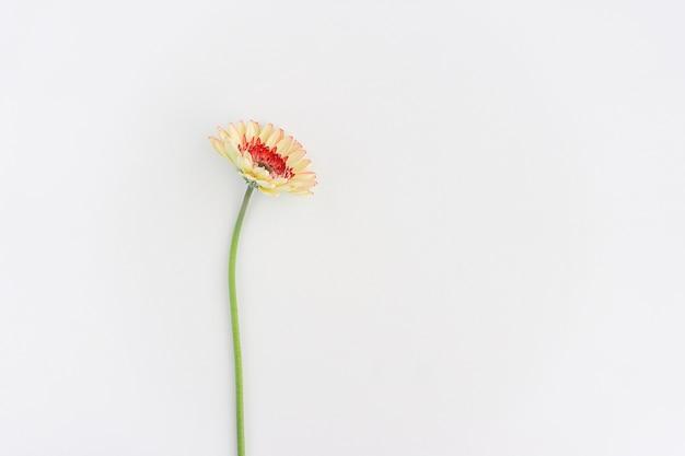 Flor só no fundo branco