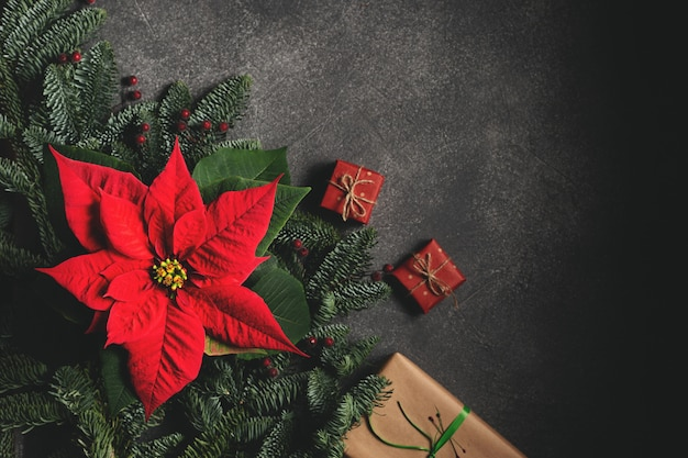 Flor tradicional de natal em fundo escuro