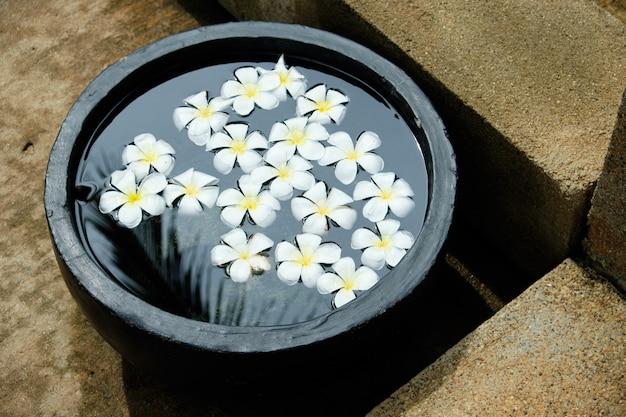 Flor tropical branca de frangipani na tigela de água
