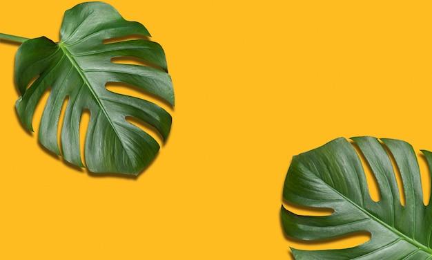 Flor tropical monstera duas folhas sobre fundo amarelo. viagem de verão, conceito de férias. composição minimalista, com espaço de cópia.