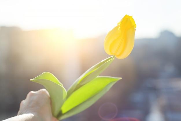 Flor tulipa amarela