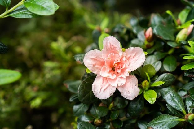 Flor velha-rosa com pequenas folhas verdes