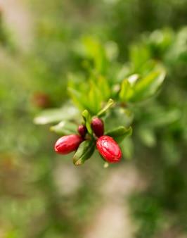 Flor vermelha com fundo desfocado