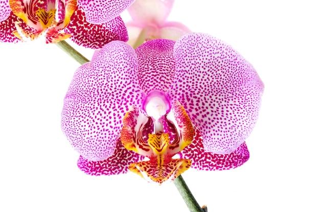 Flor vermelha de orquídea fotografada em close-up