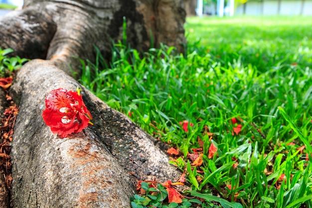 Flor vermelha na raiz e relva natural brilhante