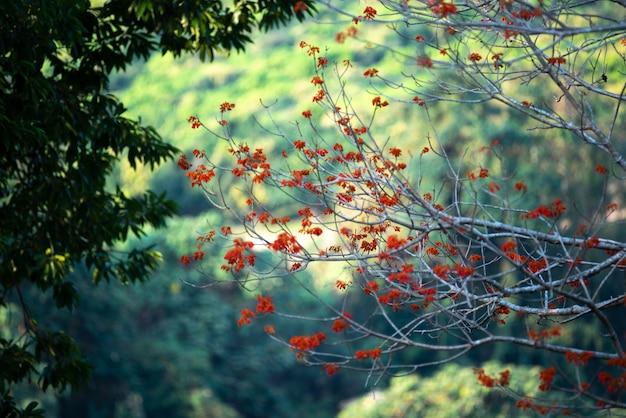 Flor vermelha no campo tropical