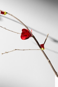 Flor vermelha pequena de ano novo chinês 2021