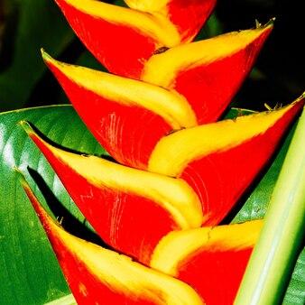 Flor vermelha tropical. fechar-se. detalhes. design mínimo