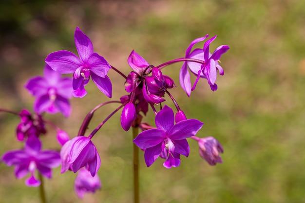Flor violeta com luz do dia