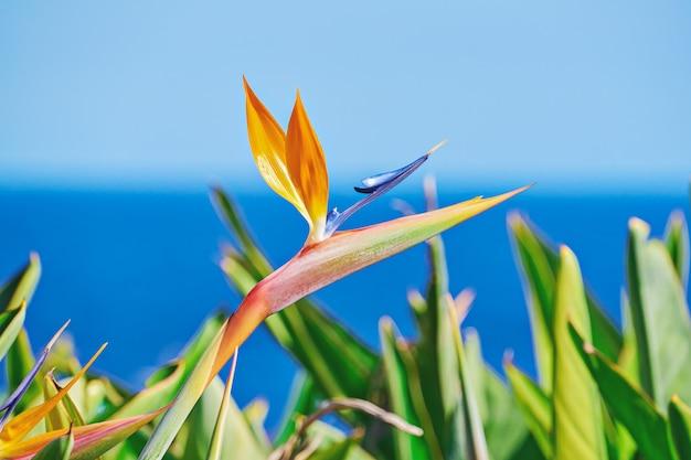 Flor vívida de ave do paraíso ou strelitzia reginae entre folhas