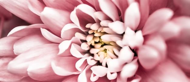 Flora branding e amor conceito margarida rosa pétalas de flores em flor abstrato floral flor arte backg ...