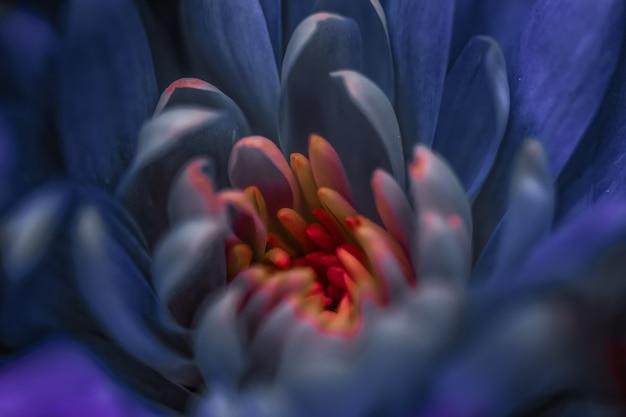 Flora branding e amor conceito pétalas de flor margarida roxa em flor flor floral abstrato arte bac ...