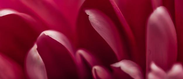 Flora branding e amor conceito pétalas de flor margarida vermelha em flor abstrato floral flor arte backgr ...