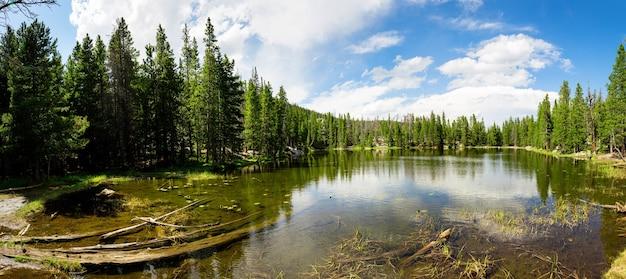 Flora e fauna do parque nacional das montanhas rochosas