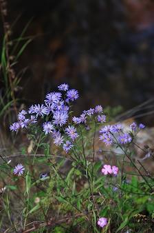 Flora na encosta do monte elbrus, no norte do cáucaso, na rússia.