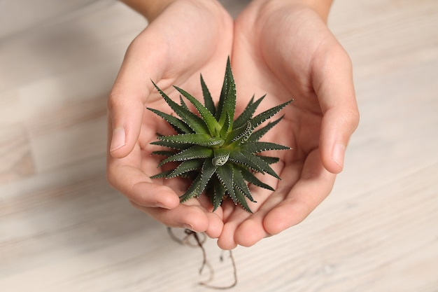 Flora para plantar em vaso.