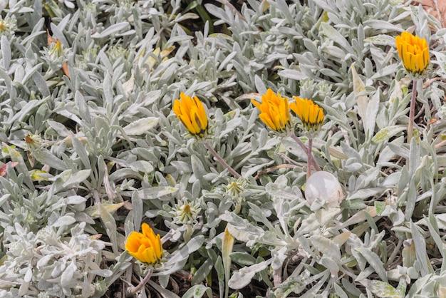 Flora selvagem no axarquia