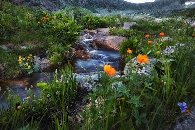 Flora surpreendente das montanhas, plantas livro vermelho